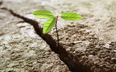 Overcoming Adversity With Grace